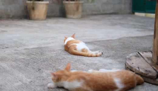今日のおはてょ 2019.04.07(日) 〜ライター業・チップ・書いた記事・英語・金・猫